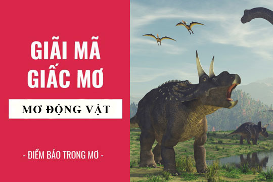 giai-ma-giac-mo-thay-dong-vat-la-diem-lanh-hay-du