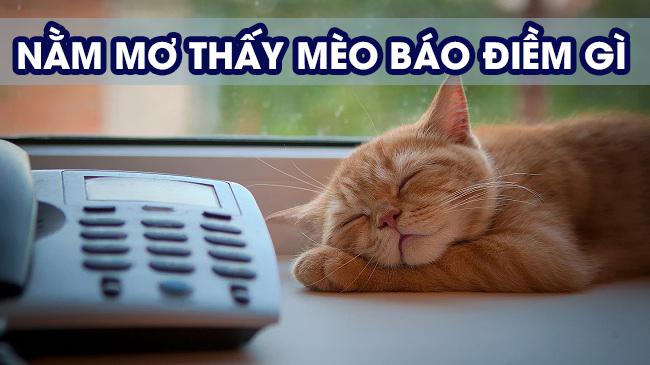 Giải mã mơ thấy mèo điềm báo gì