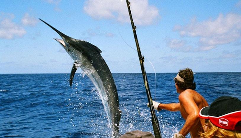 Mơ thấy câu được cá to