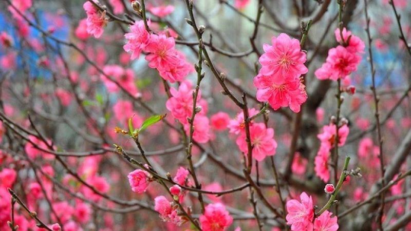 Mơ thấy cây nhiều hoa
