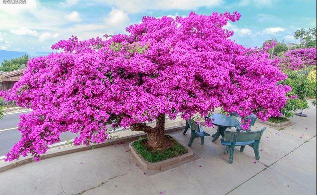 Mơ thấy cây nở hoa