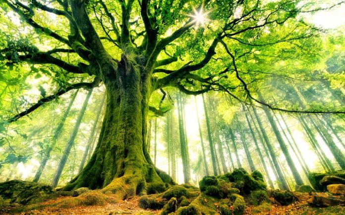 Mơ thấy cây to