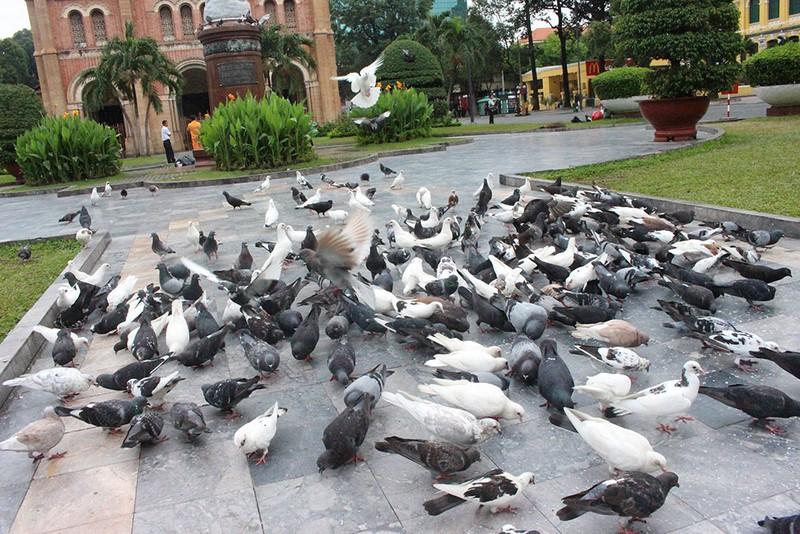 Mơ thấy chim bồ câu bay xuống
