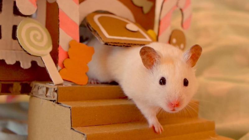 Mơ thấy con chuột bạch