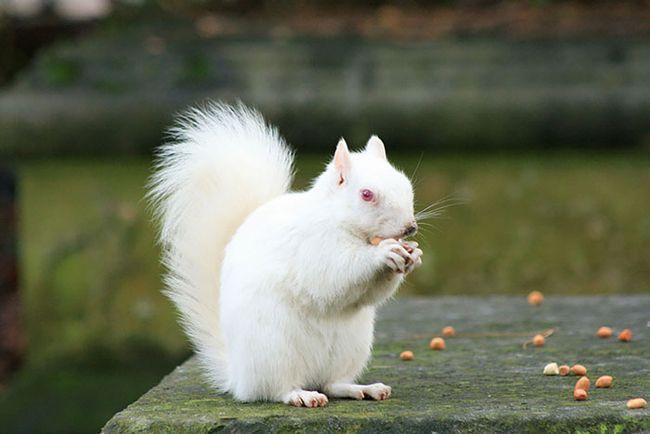 Chiêm bao thấy con sóc màu trắng