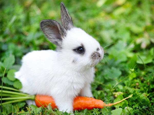 Mơ thấythỏ con ăn cà rốt
