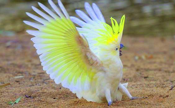 Mơ thấy con vẹt trắng