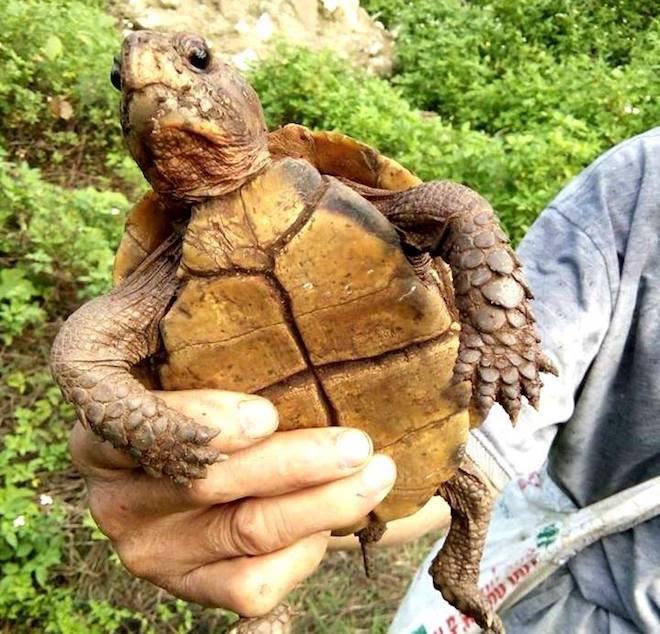 Mơ thấy đang săn rùa