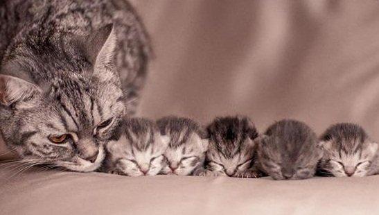 Mơ thấy đẻ ra mèo