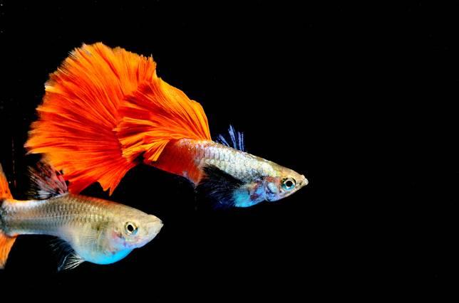 Mơ thấy đẻ ra một con cá rất đẹp