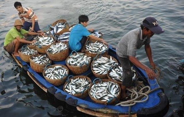 Mơ thấy đi đánh được cá