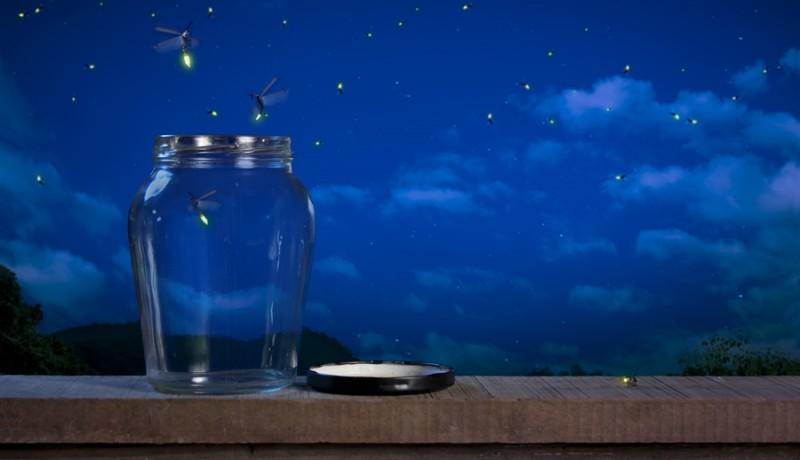 Mơ thấy đom đóm bay vào nhà