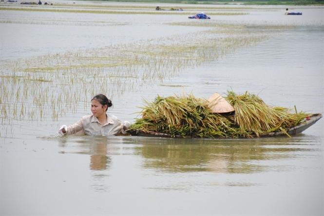 Mơ thấy đồng lúa ngập nước