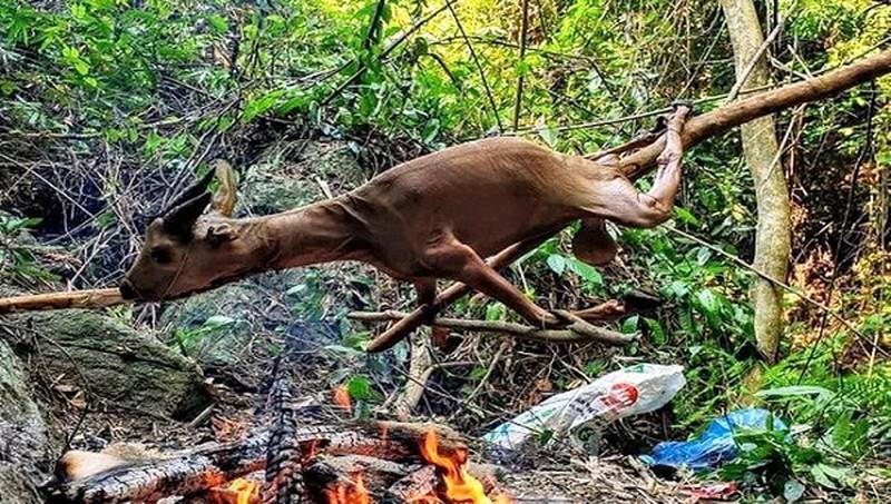 Mơ thấy dùng lửa đốt súc vật