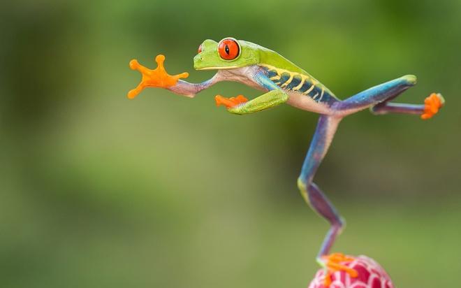Mơ thấy ếch nhảy