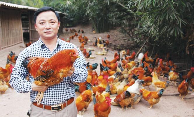 Mơ thấy gặp gà