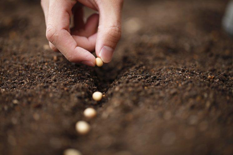 Mơ thấy gieo trồng