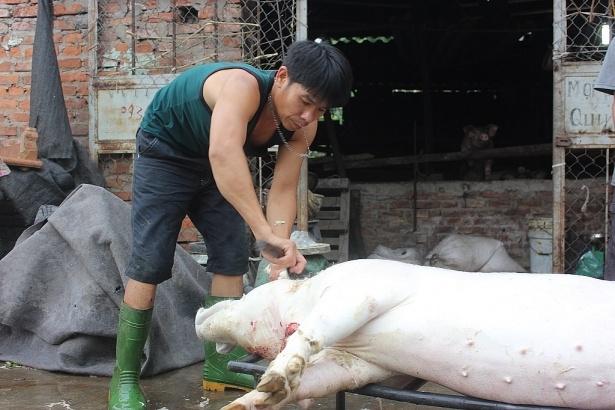 Mơ thấy giết lợn nhà mình