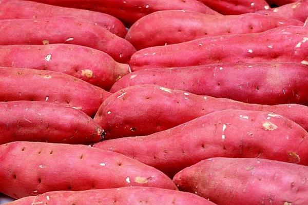 Mơ thấy củ khoai lang đỏ