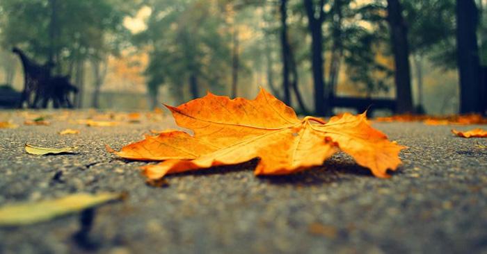 Mơ thấy lá rụng