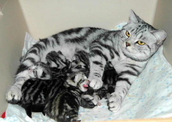 Mơ thấy mèo đẻ ra mèo con