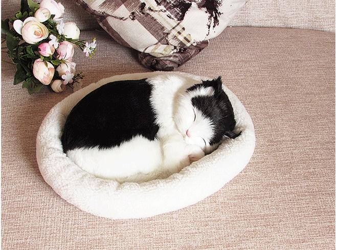 Mơ thấy mèo ngủ trong tư thế cuộn tròn