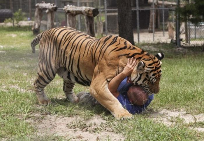 Mơ thấy mình bị hổ tấn công