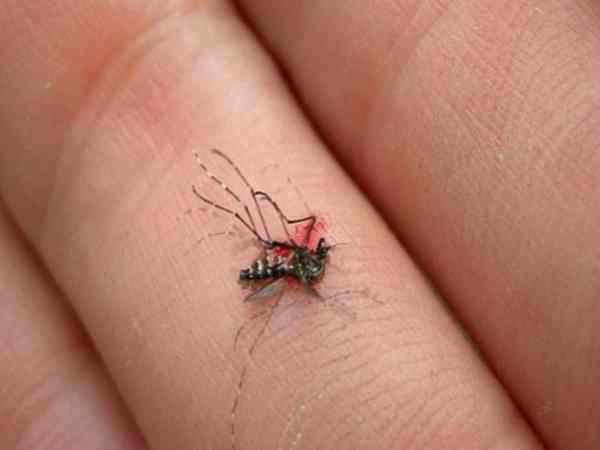 Mơ thấy mình giết muỗi