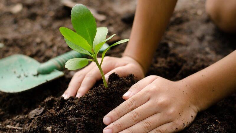 Mơ thấy mình trồng cây