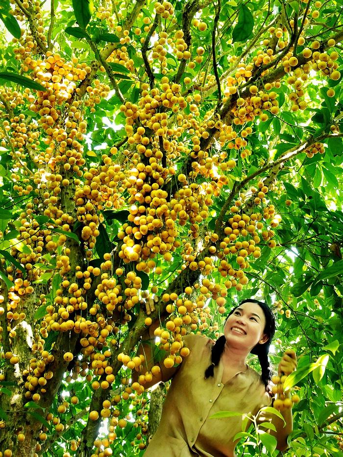 Mơ thấy mình vào vườn cây ăn quả sai trĩu