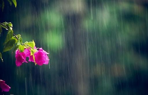 Mơ thấy mưa nhỏ