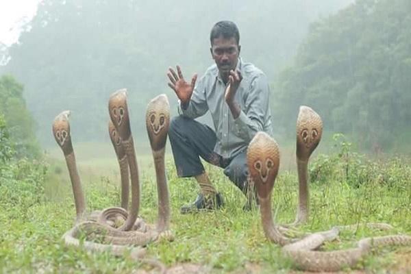 Mơ thây rắn đuổi
