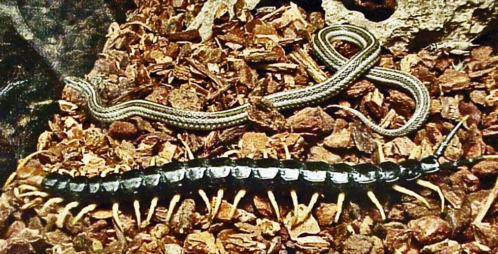 Mơ thấy rắn rết