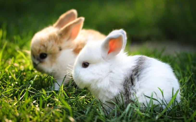 Mơ thấy thỏ con