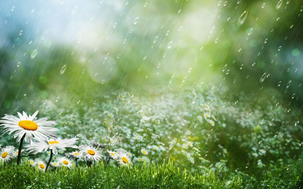Mơ thấy trời đang đẹp bỗng mưa nhỏ