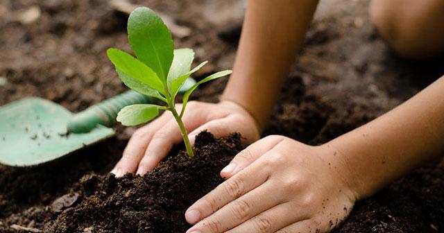 Mơ thấy trồng cây